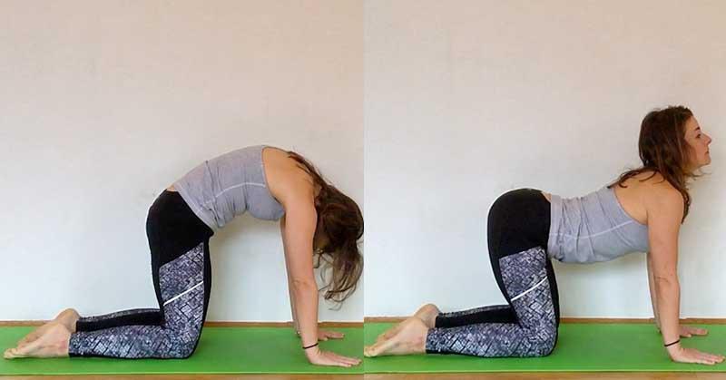 Cat Cow Pose Marjarasana Bitilasana This Yoga Duo