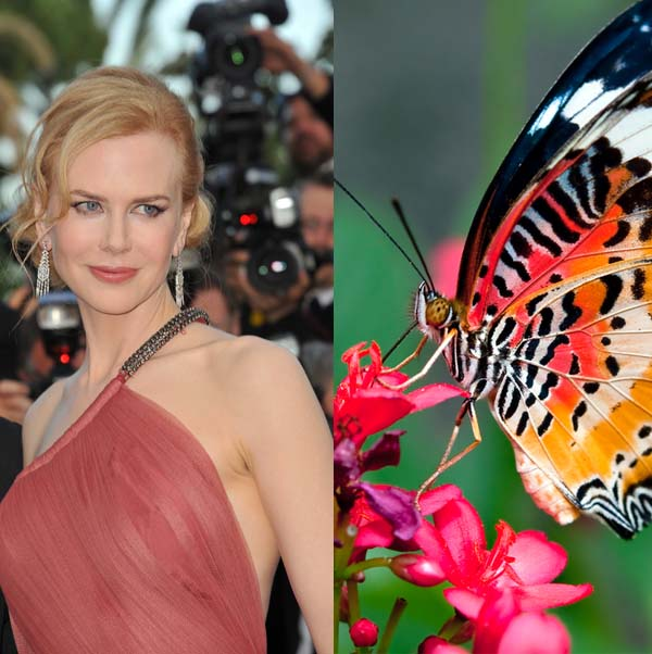 Nicole Kidman copy